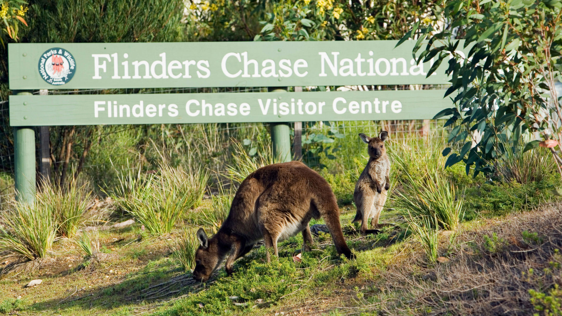 2 Day Highlights of Kangaroo Island Tour