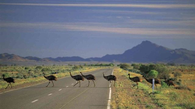 4 Day / 3 Night Flinders Ranges Outback Tour