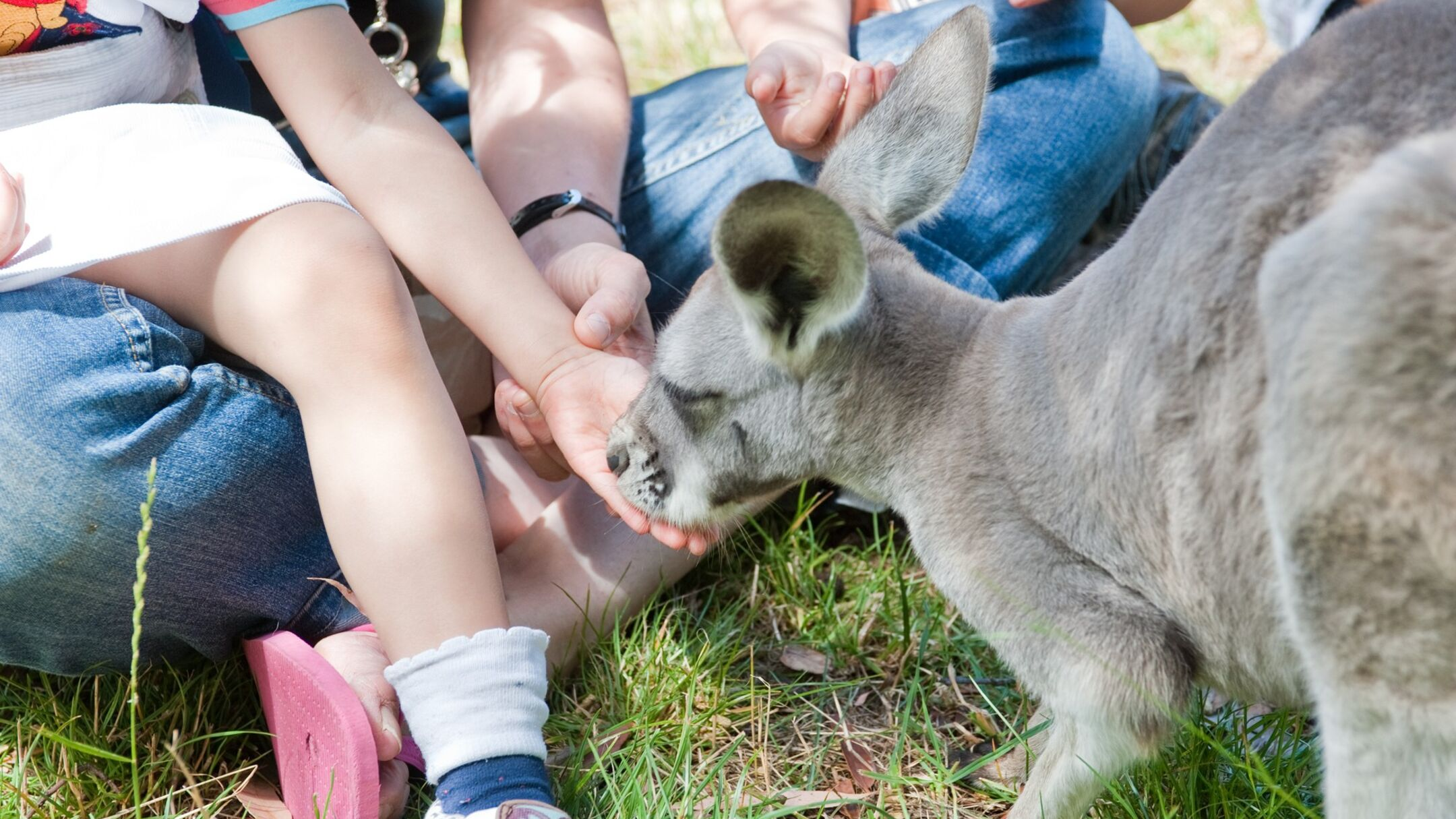 Adelaide Hills including Cleland Wildlife Park